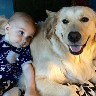 #sorrynotsorry. The Internet needs a boy and his dog. 👶🏻💙🐶#goldenretriever #goldensofinstagram