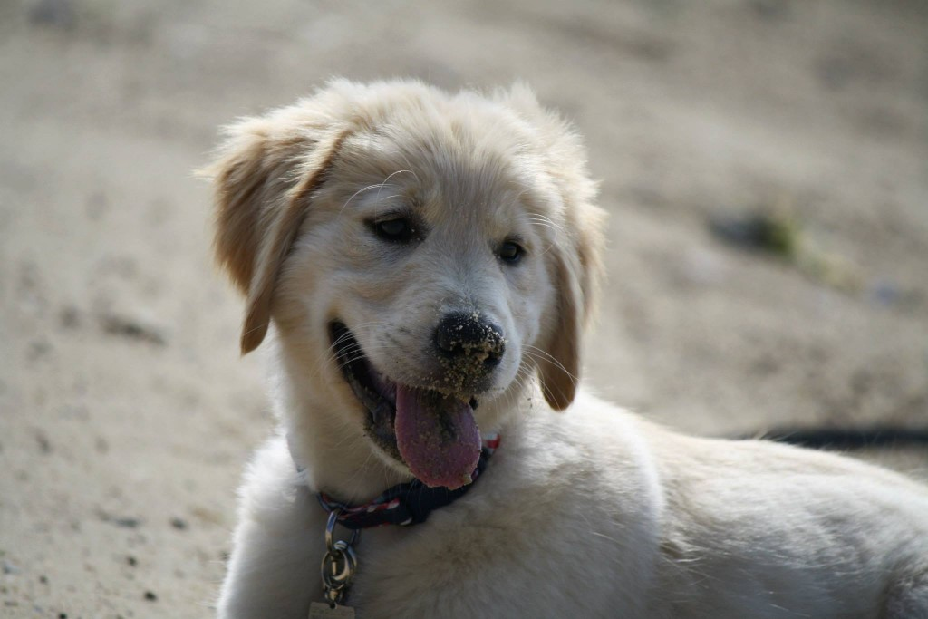 Sandy smiles for all!